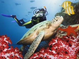 Drift-Diving in der Karibik